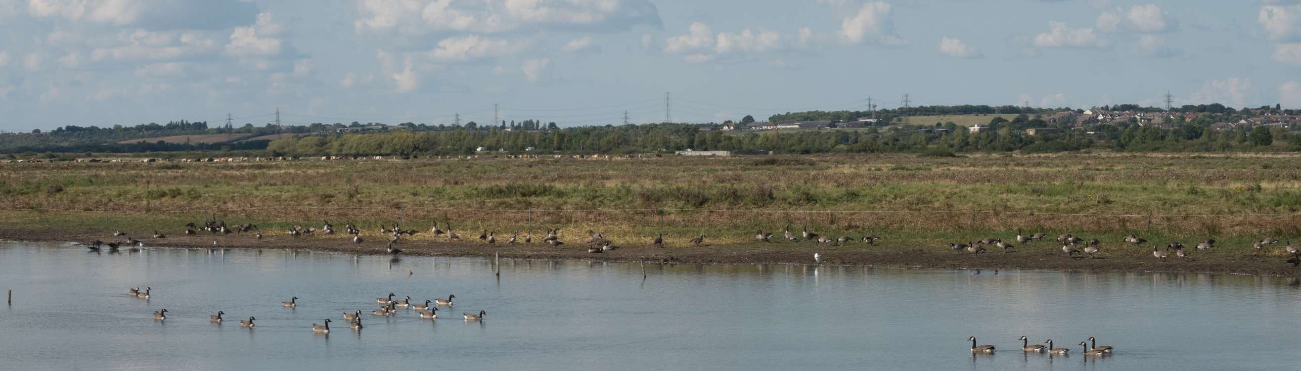 West Canvey Marshes RSPB