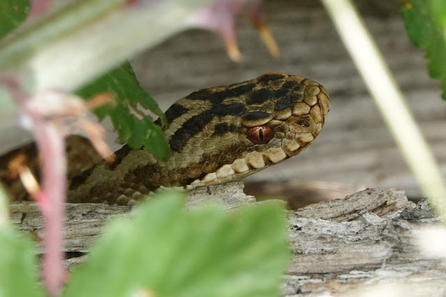 And Adders too
