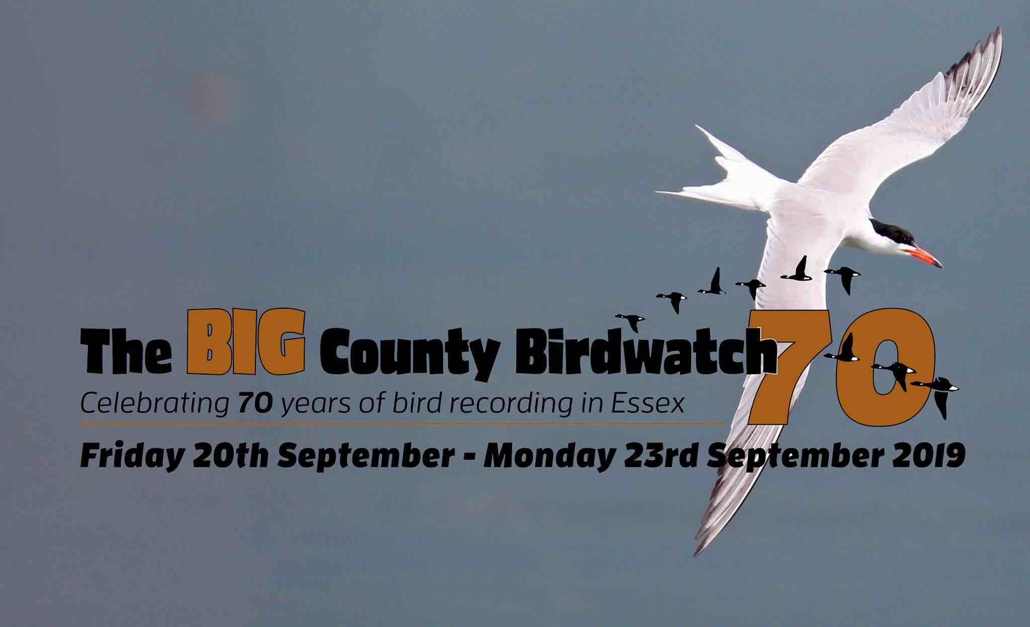 The Big County Birdwatch