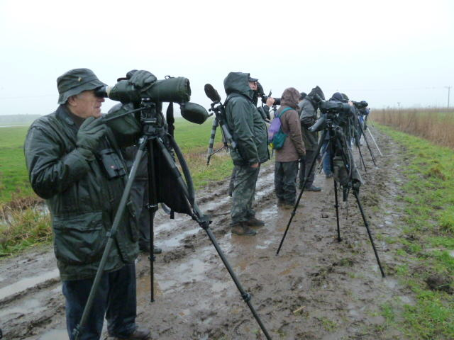 Buckenham Marshes - 17th January 2011 - the most appalling weather while goose watching