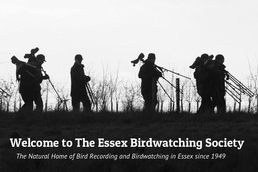 Welcome to The Essex Birdwatching Society